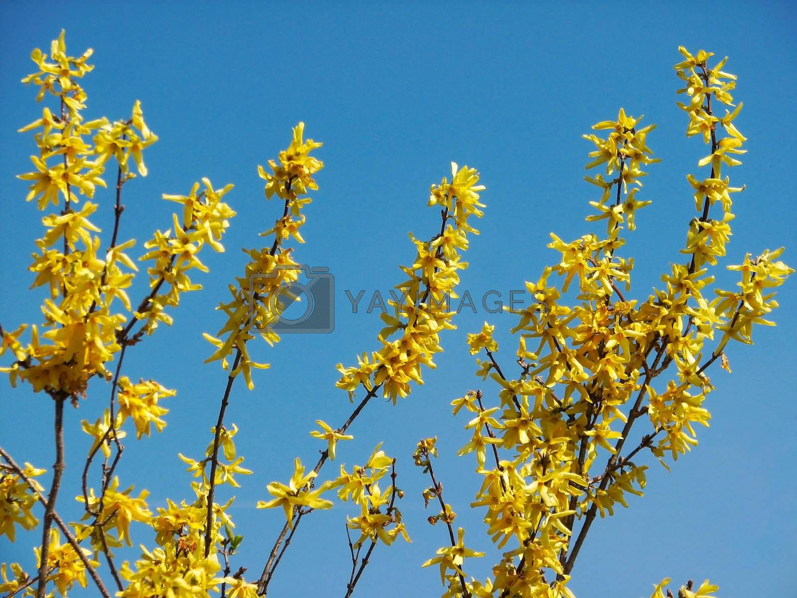 Some yellow flowers in front of bright blue sky