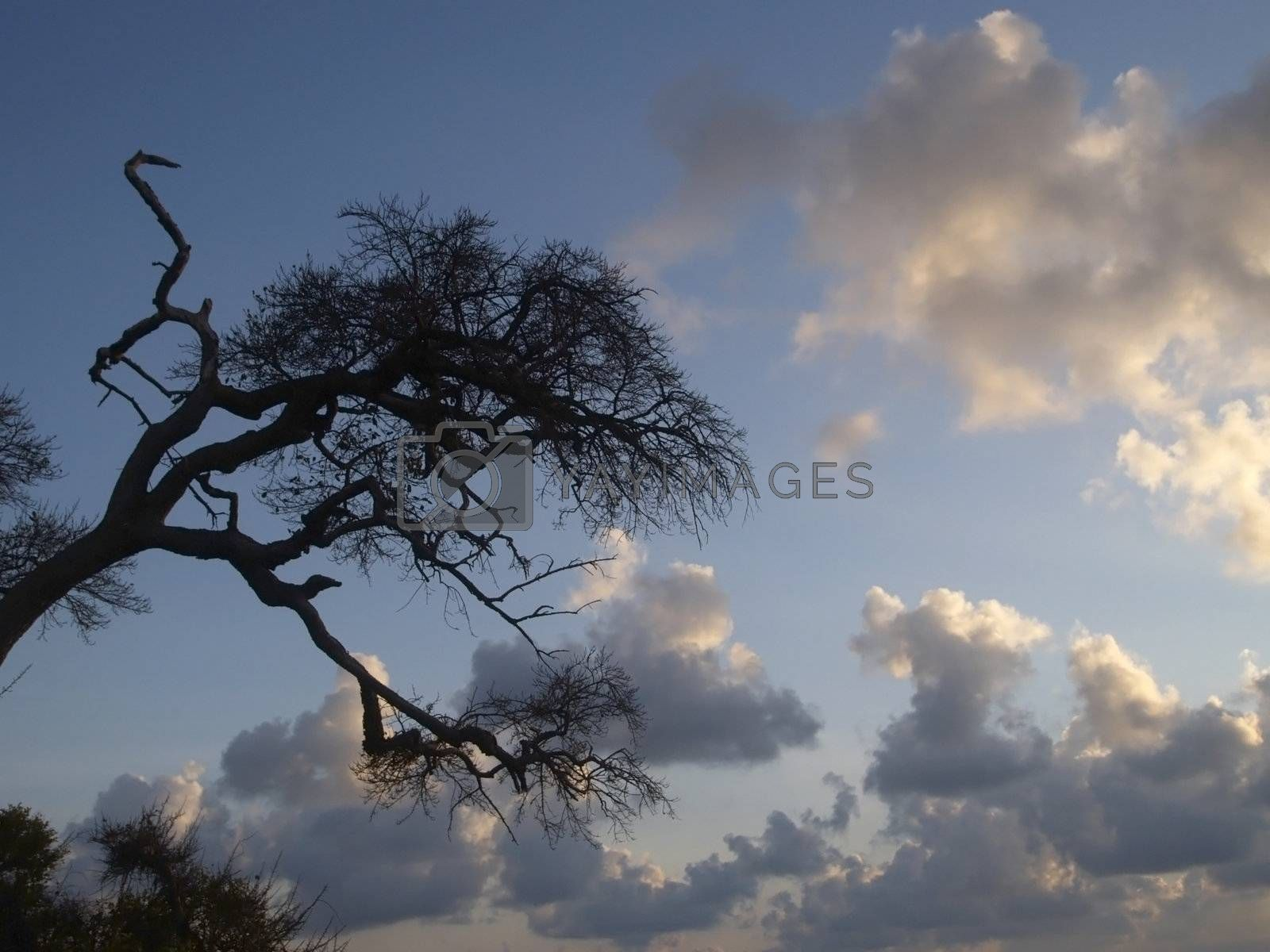 Tree and clouds by epixx