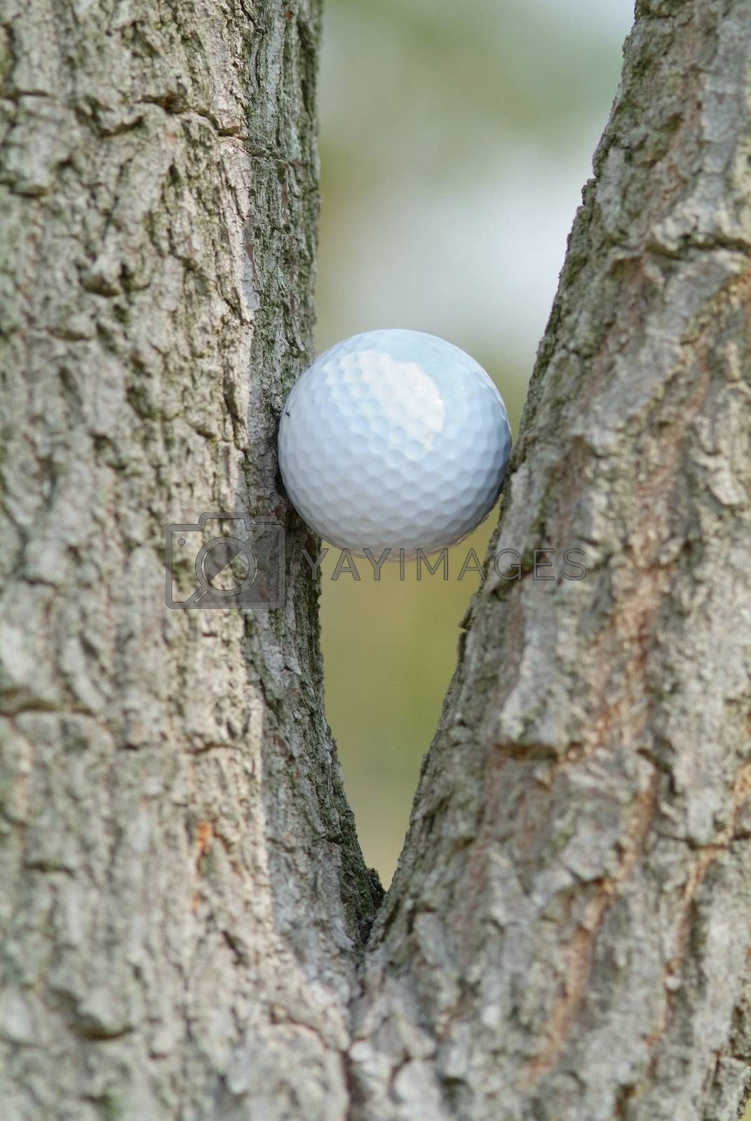 Golf ball in a tree by epixx
