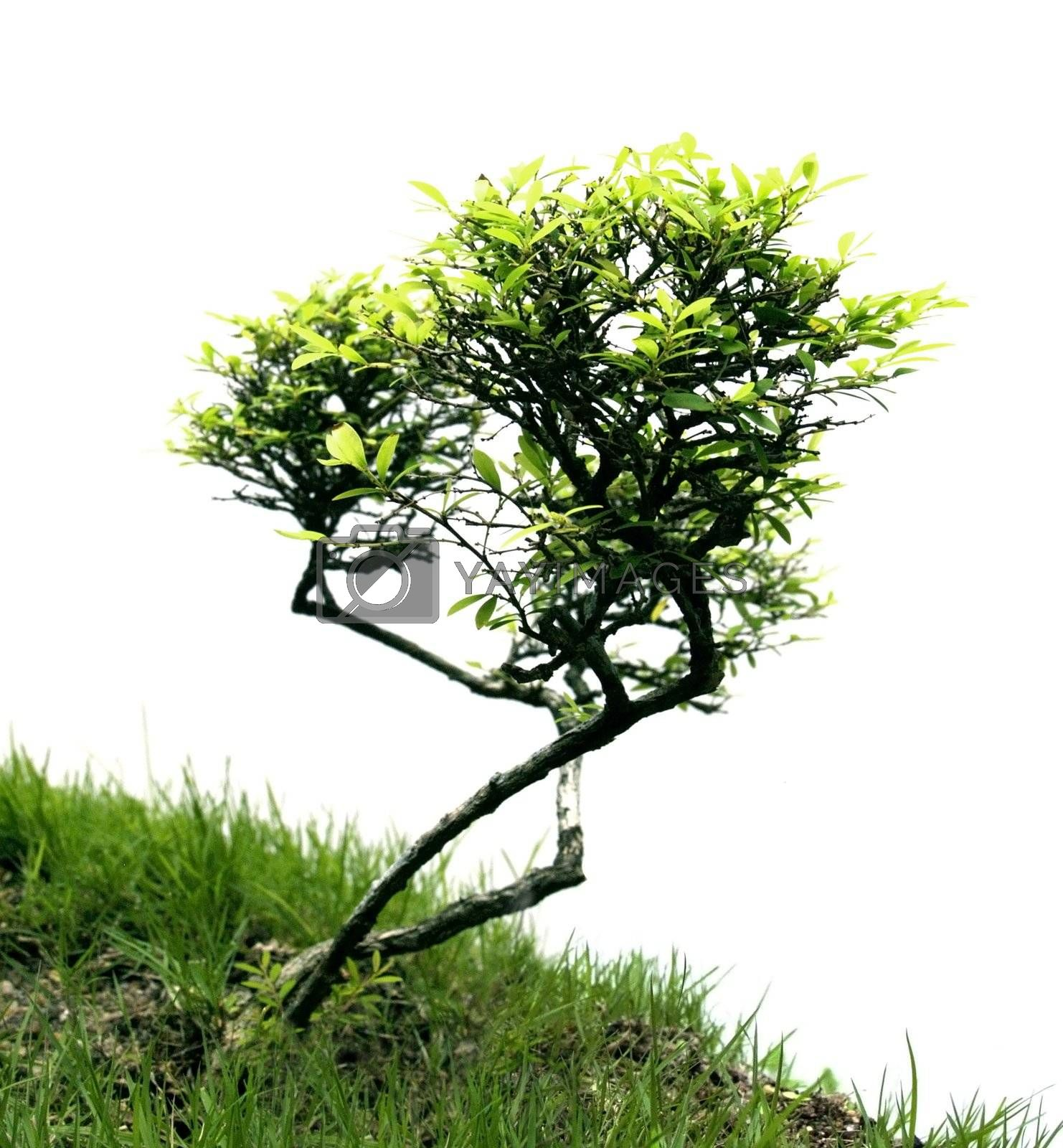 Miniature tree by epixx