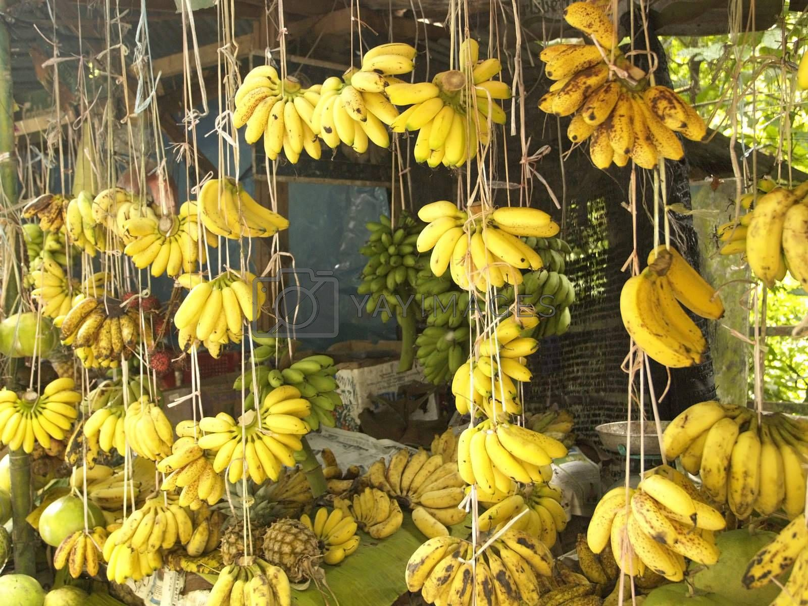 Banana shop by epixx