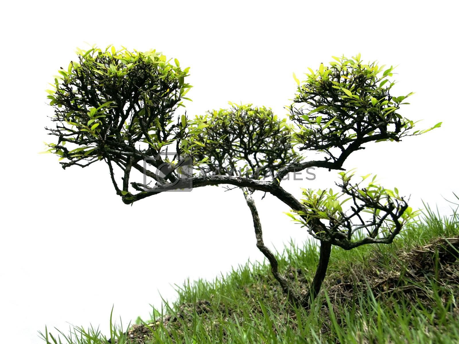 Miniature tree by epixx