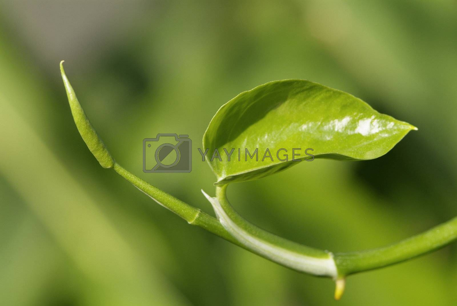Green leaf abstract by epixx