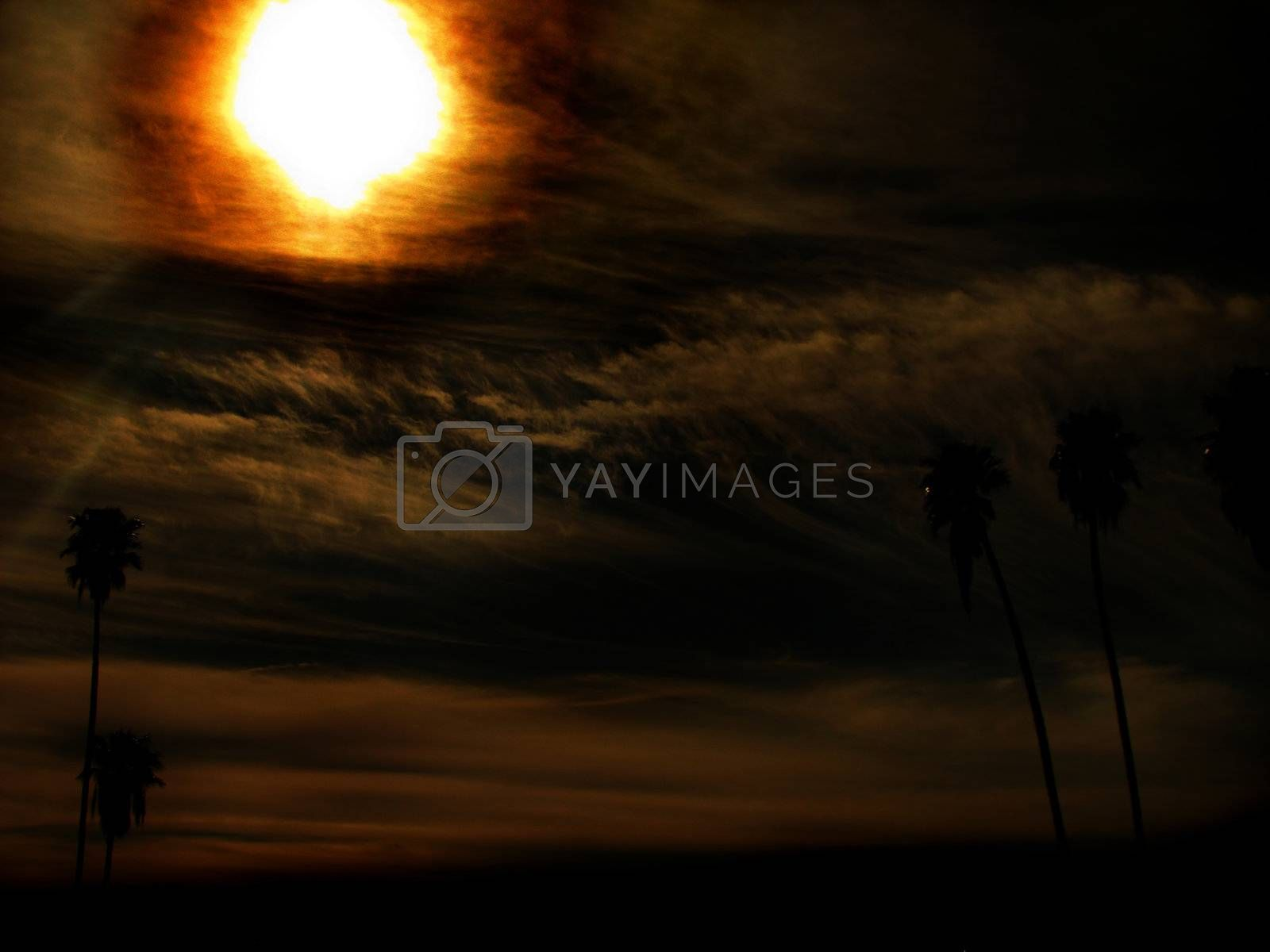 Royalty free image of Paradise Sun Burn by mwp1969