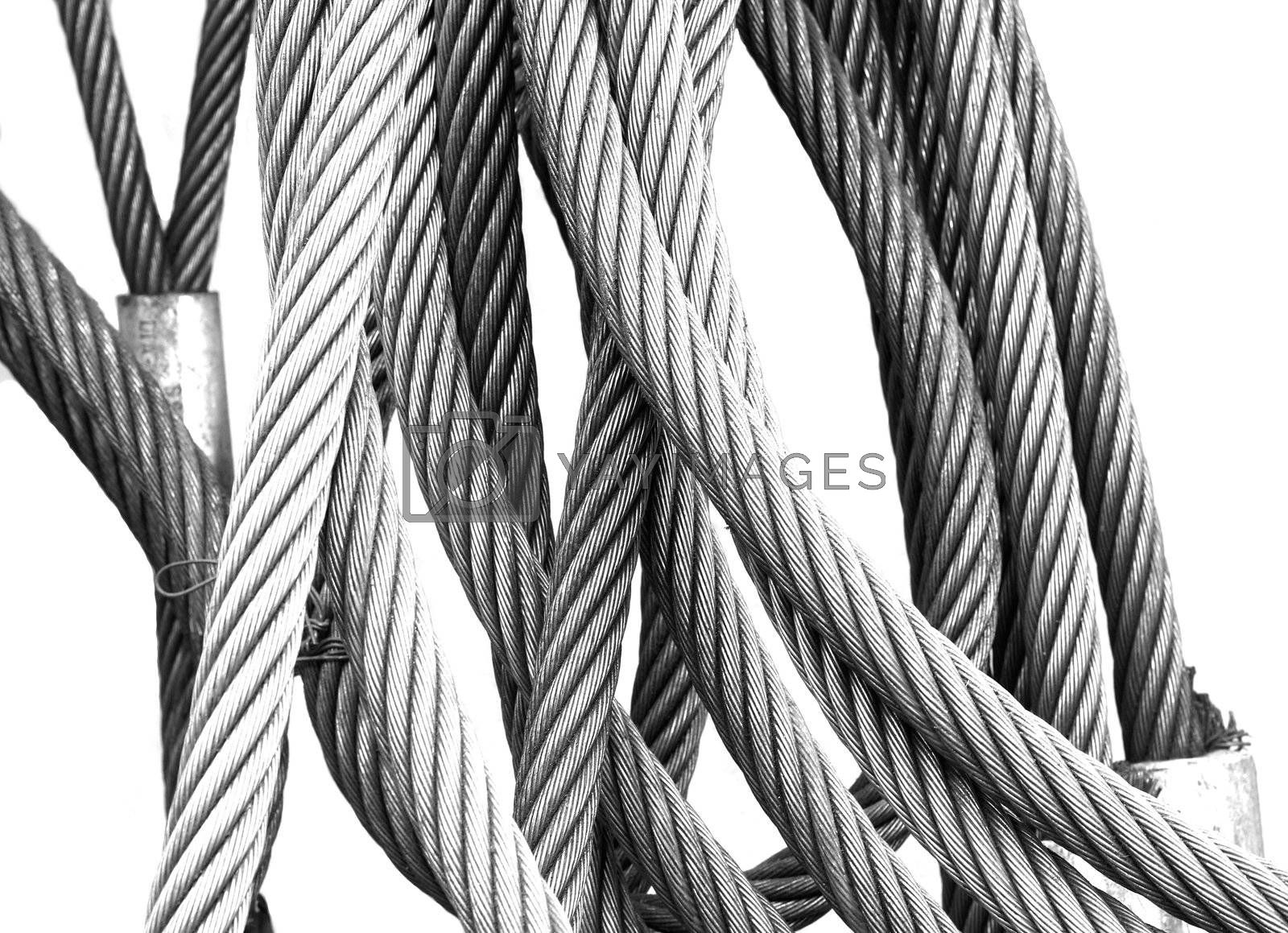 Royalty free image of Steel wires by epixx