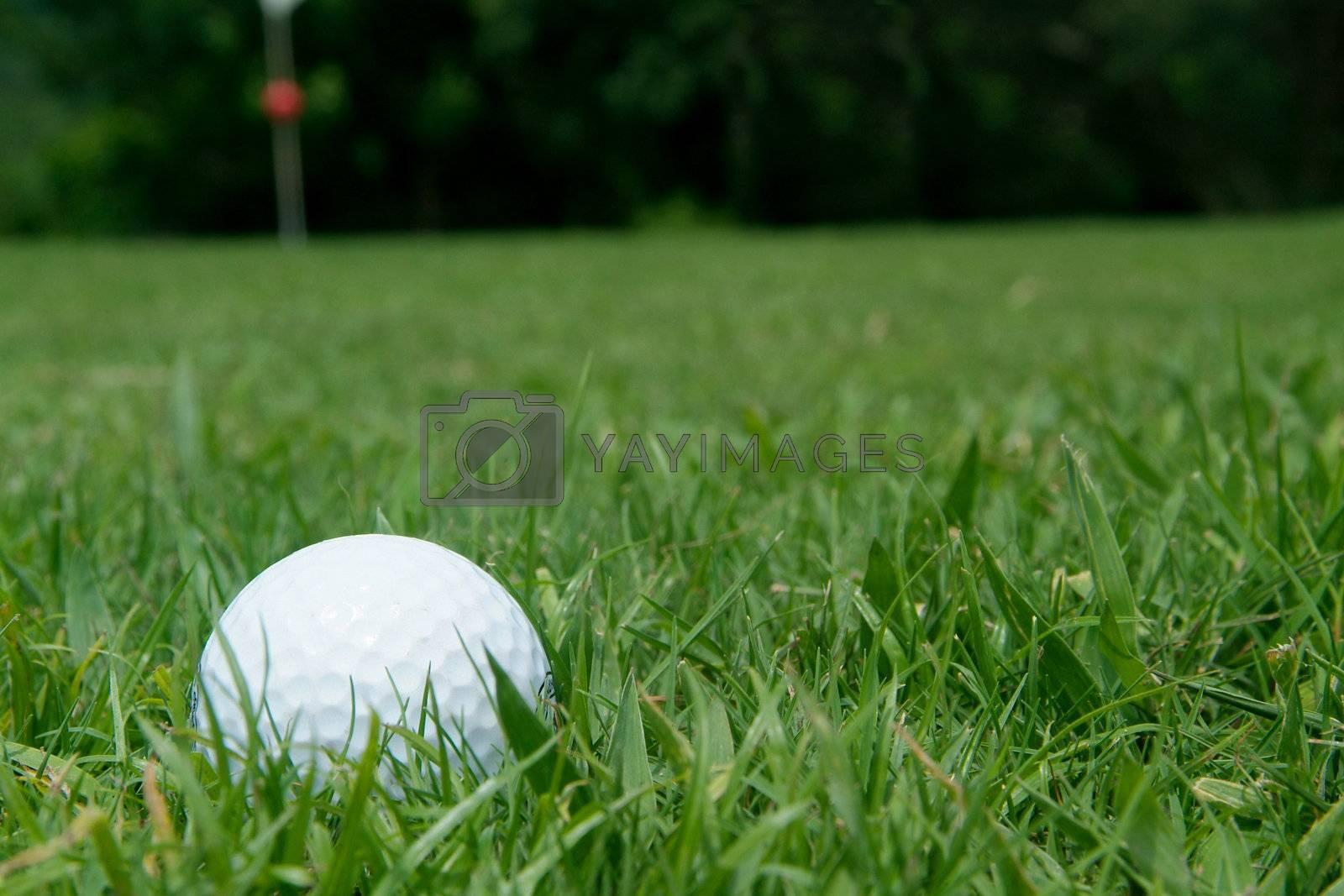 Golfball near green by epixx