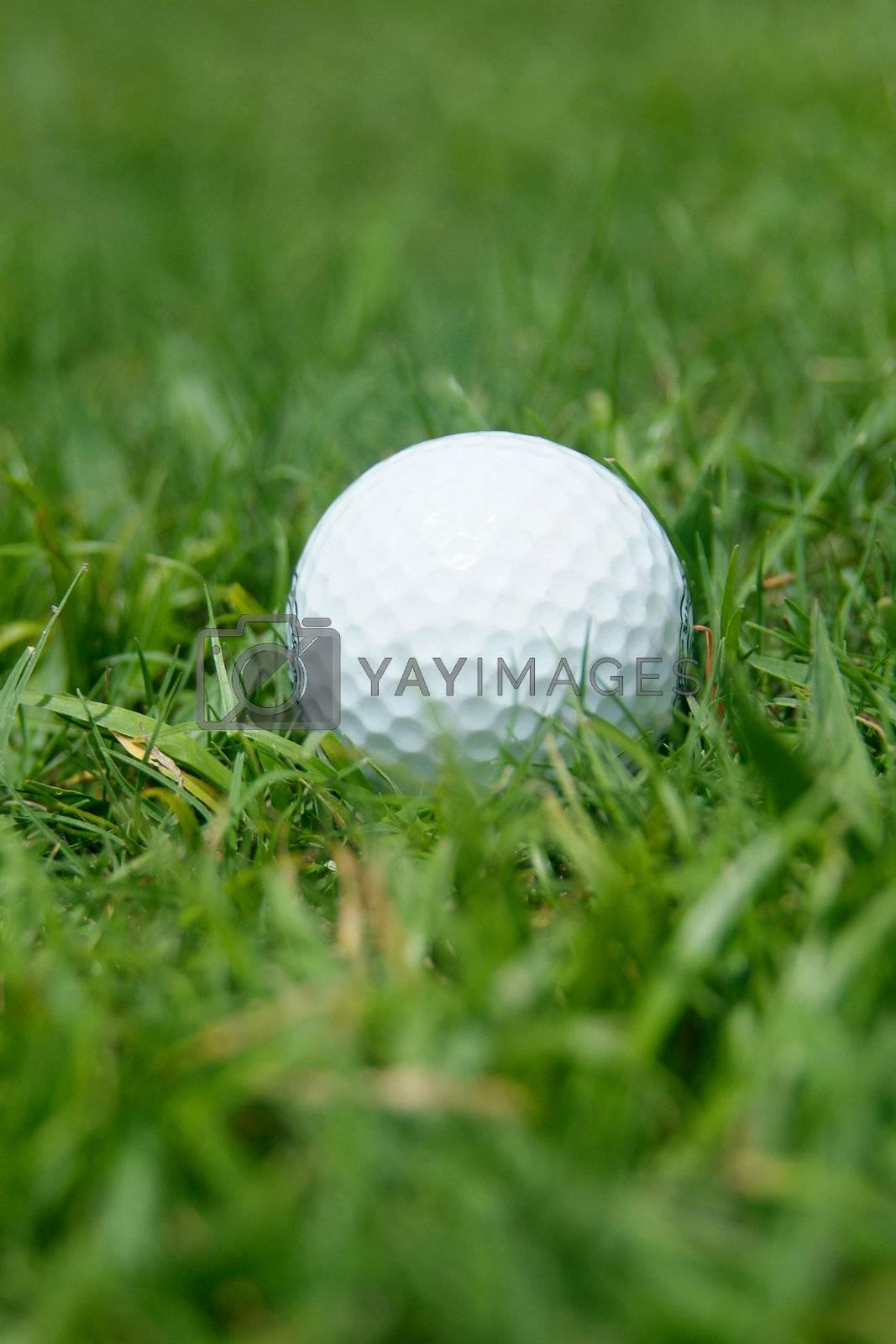 Golf-ball in the grass by epixx