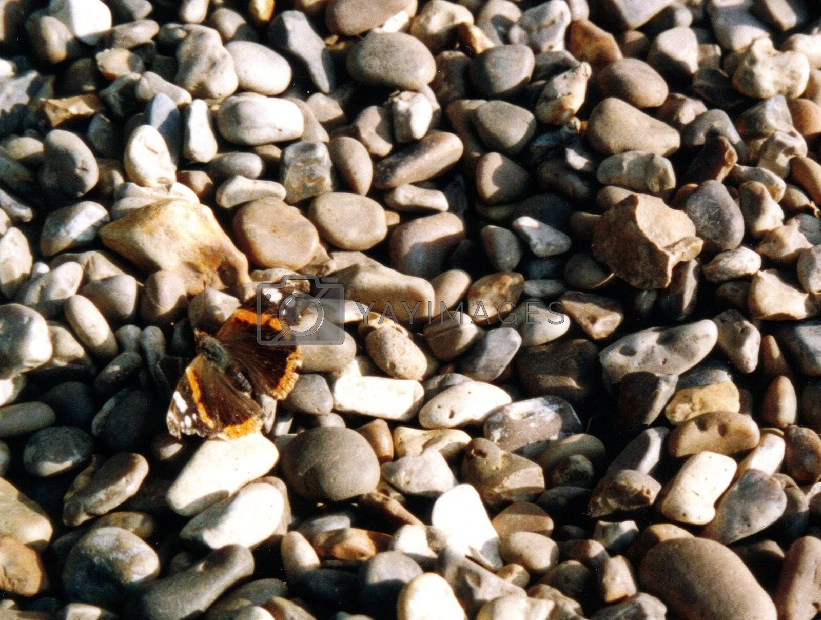 "butterfly ""Red Admiral"" on pebbles"