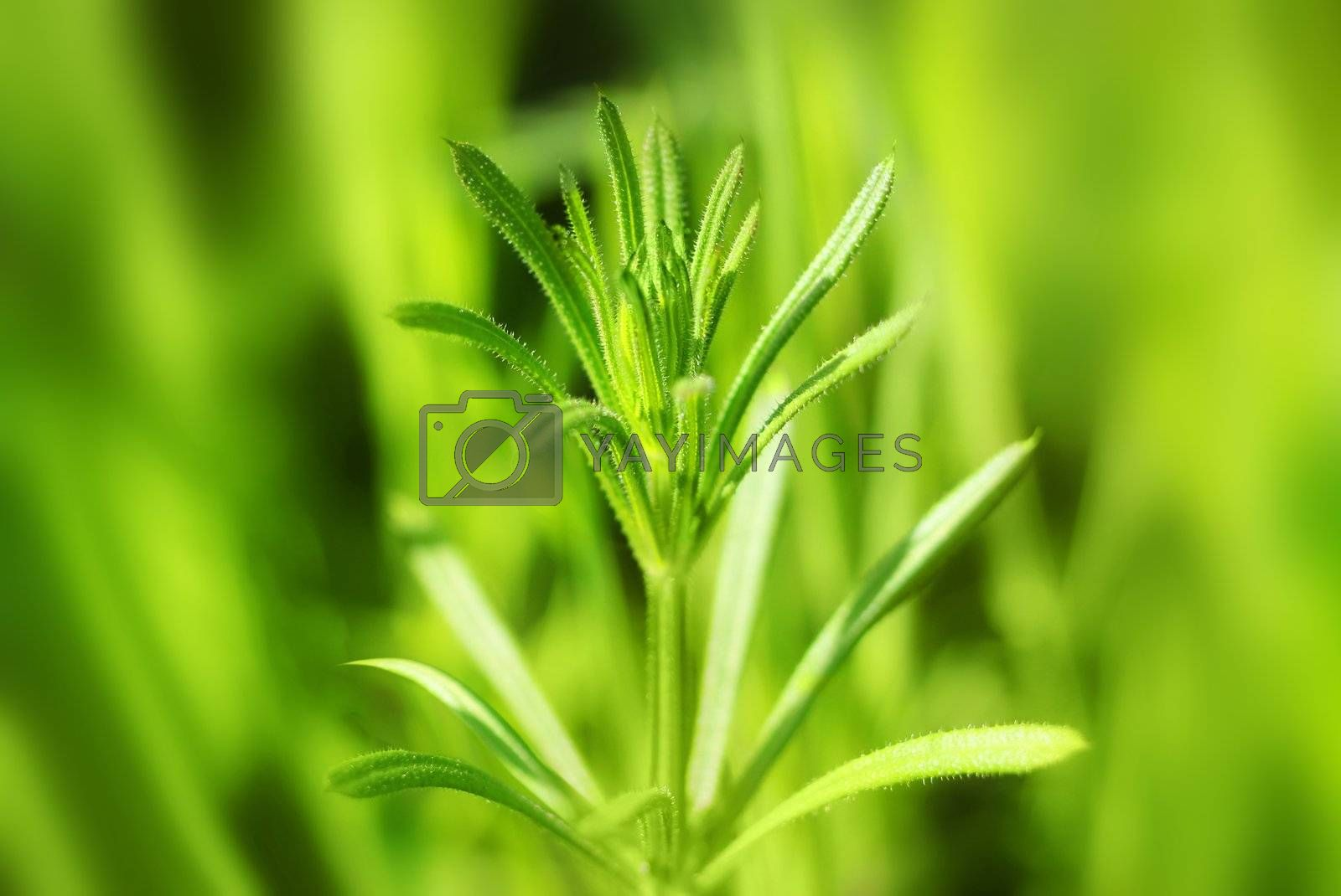 Single sprout on natural green defocused background