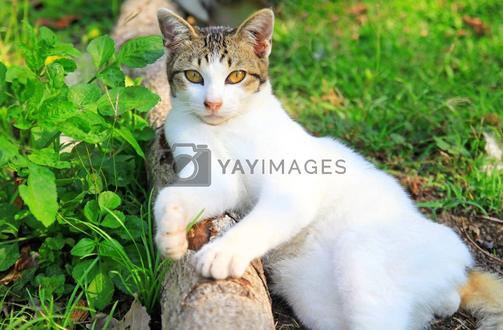 a cat lying on log wood in the garden