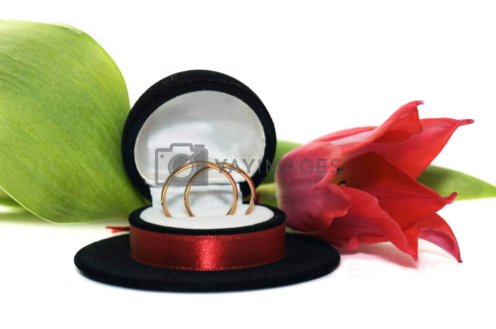 Wedding rings in a casket with a red tulip on a white background