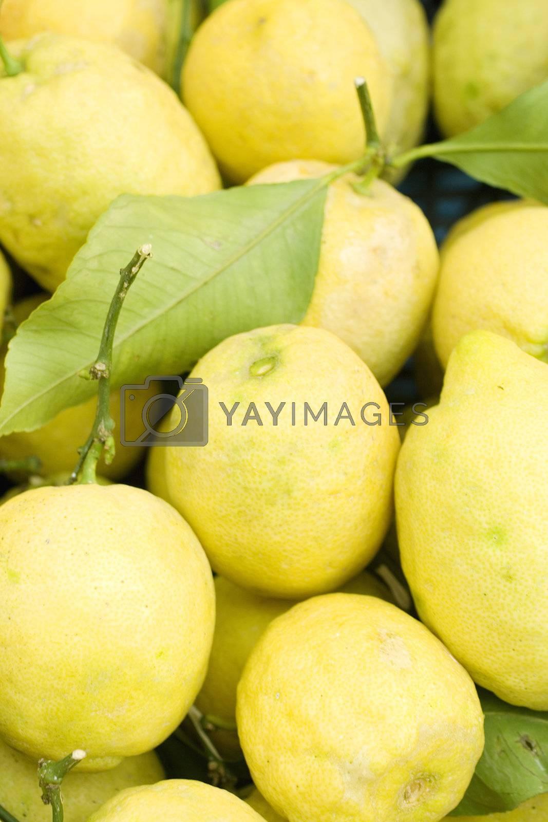 A lot of Sorrento's lemons