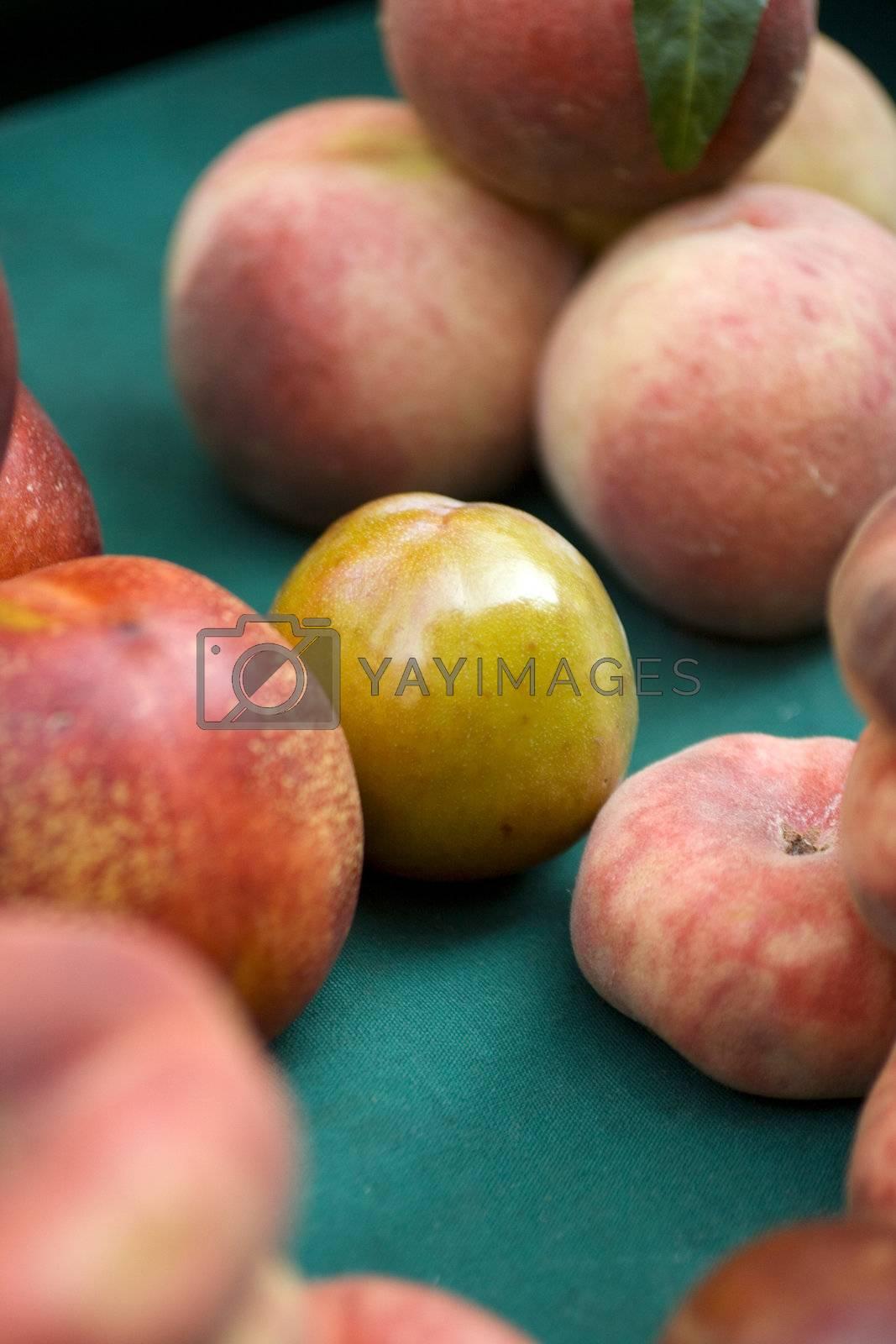 Plum among peaches
