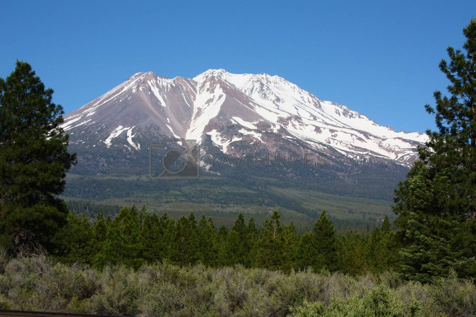 Royalty free image of Mt. Shasta  by gregorydean
