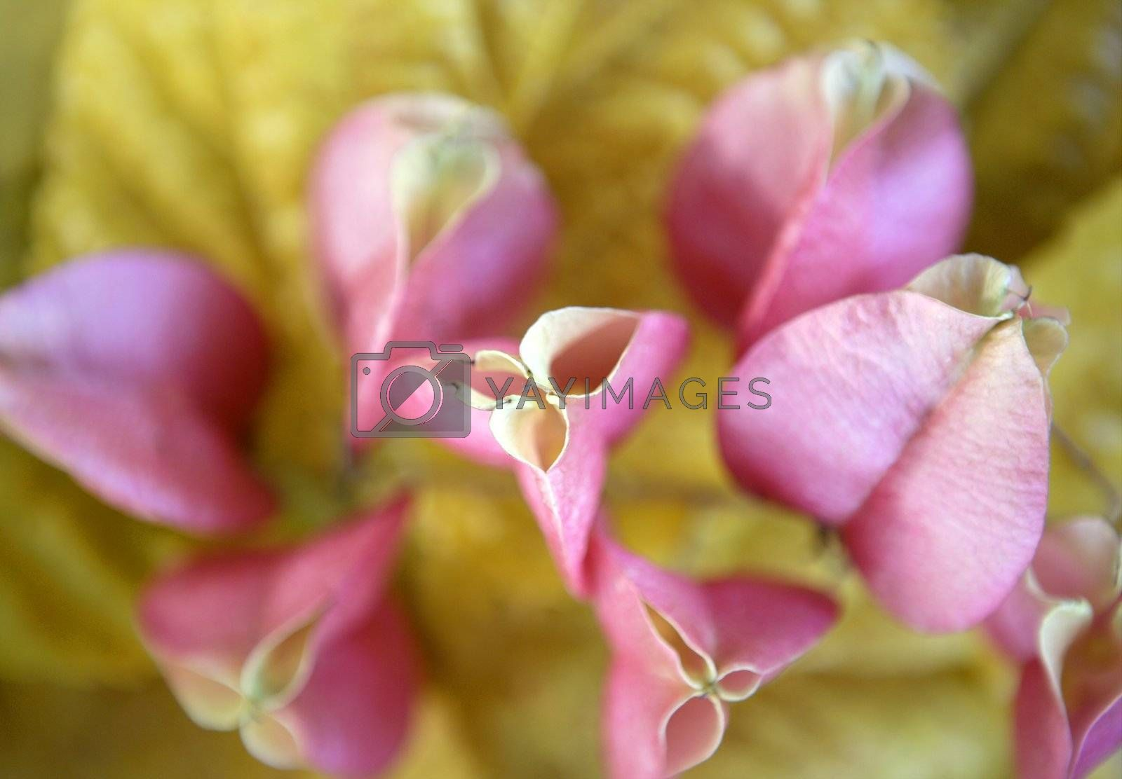 Royalty free image of Autumn pink flowers over yellow leafs still by lunamarina