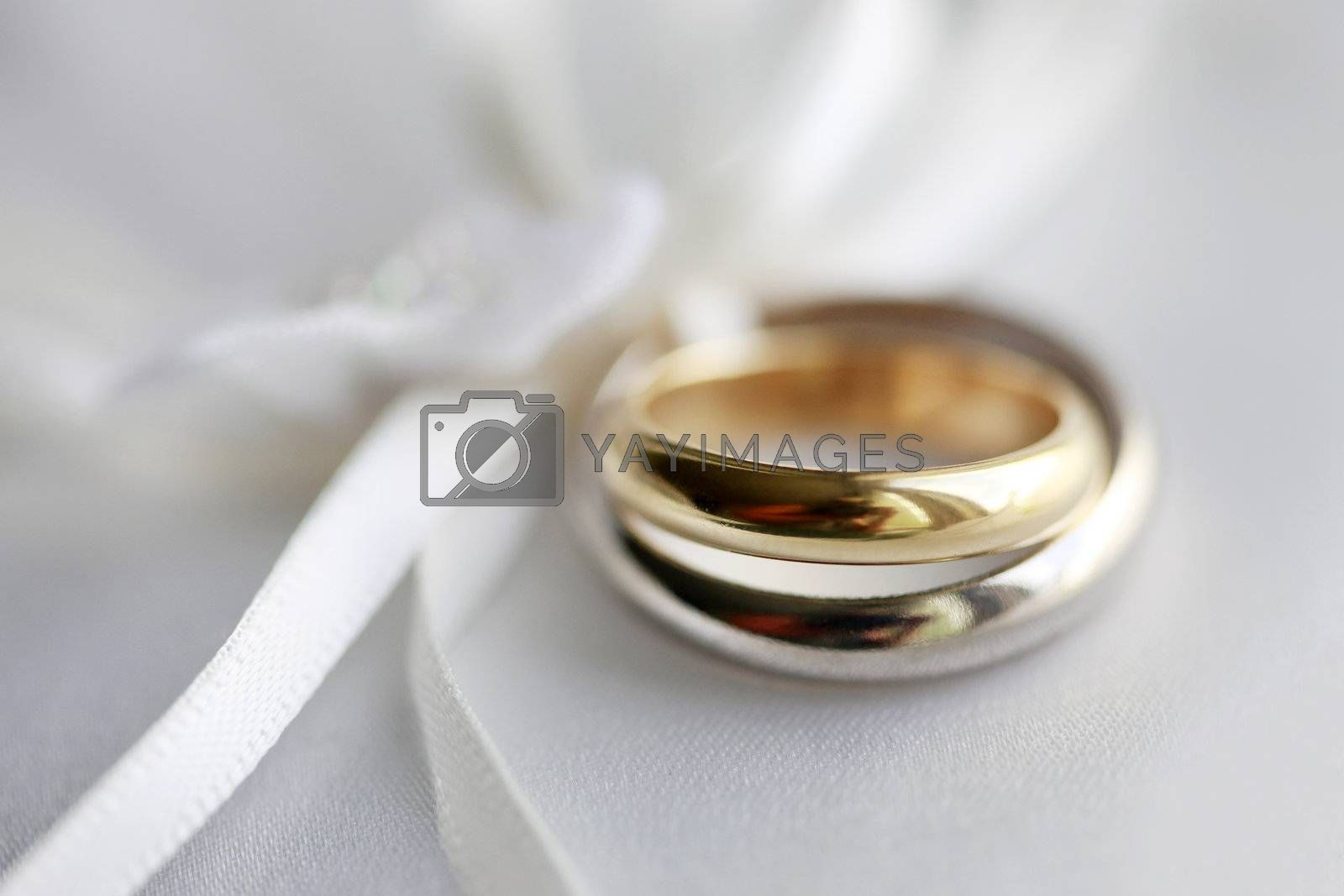Royalty free image of Wedding rings by friday