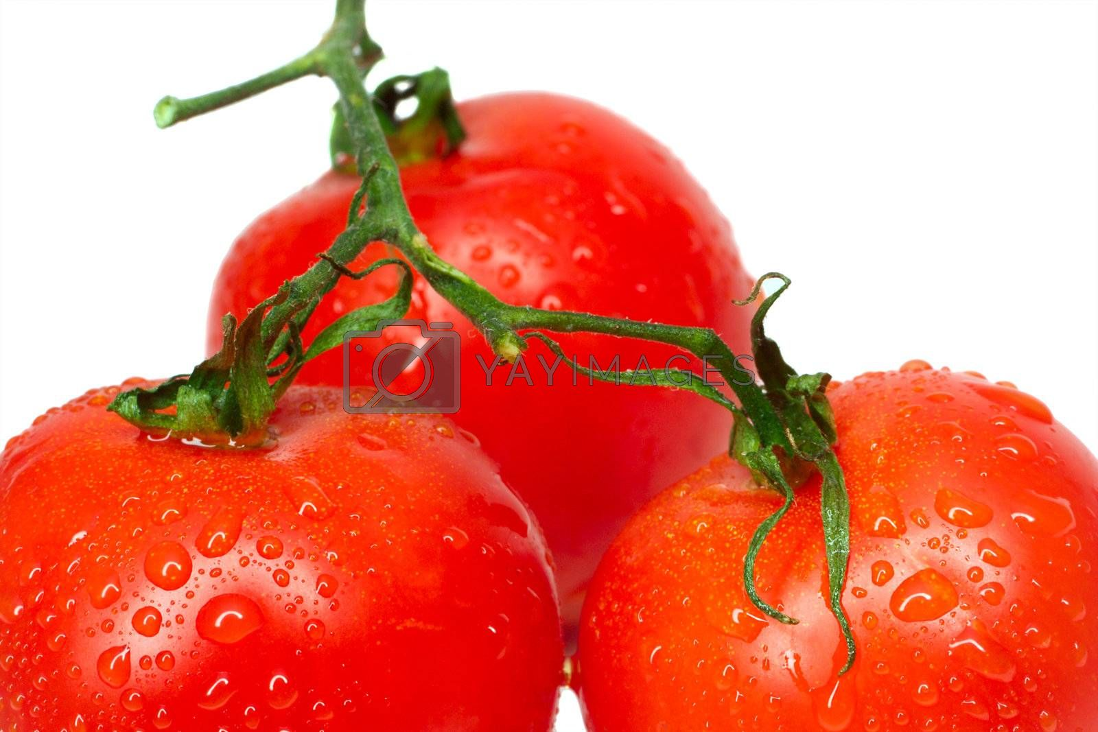 close-up three tomatoes with waterdrops, isolated on white