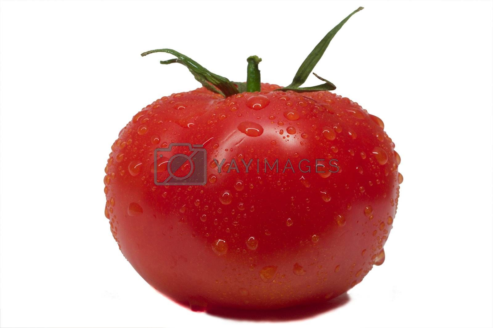 close-up whole tomato with waterdrops, isolated on white