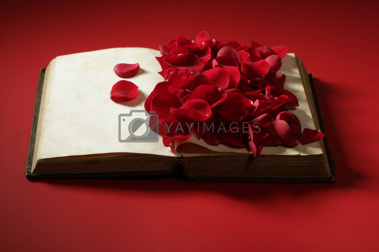 Royalty free image of Rose petals over old aged book by lunamarina