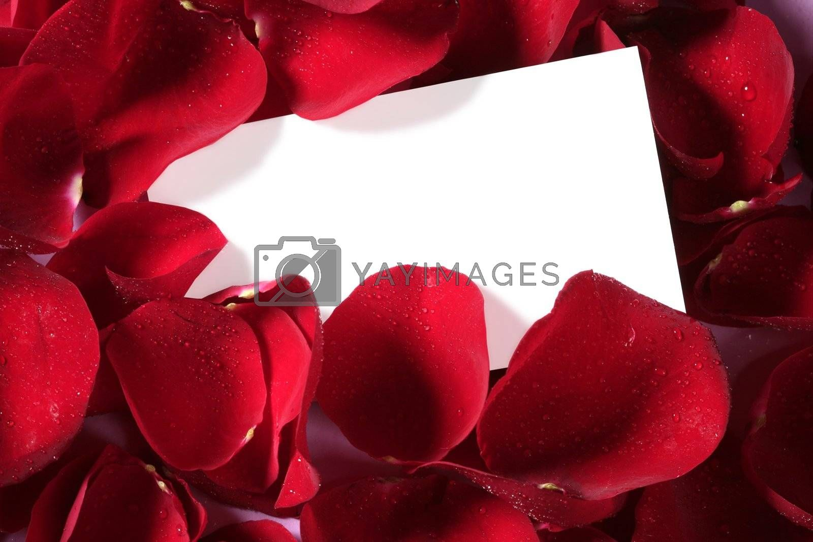 Royalty free image of Red rose macro close up with blank note by lunamarina