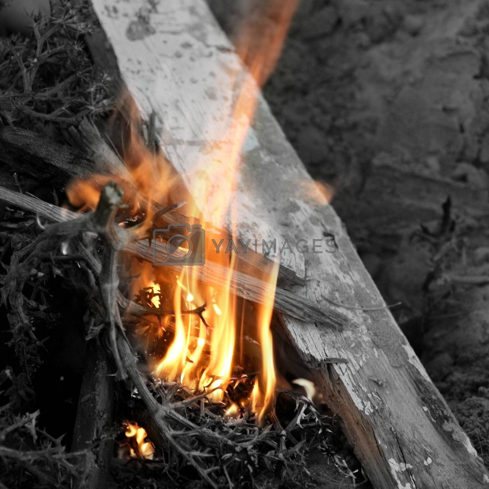 Royalty free image of Embers texture, wood in fire by lunamarina