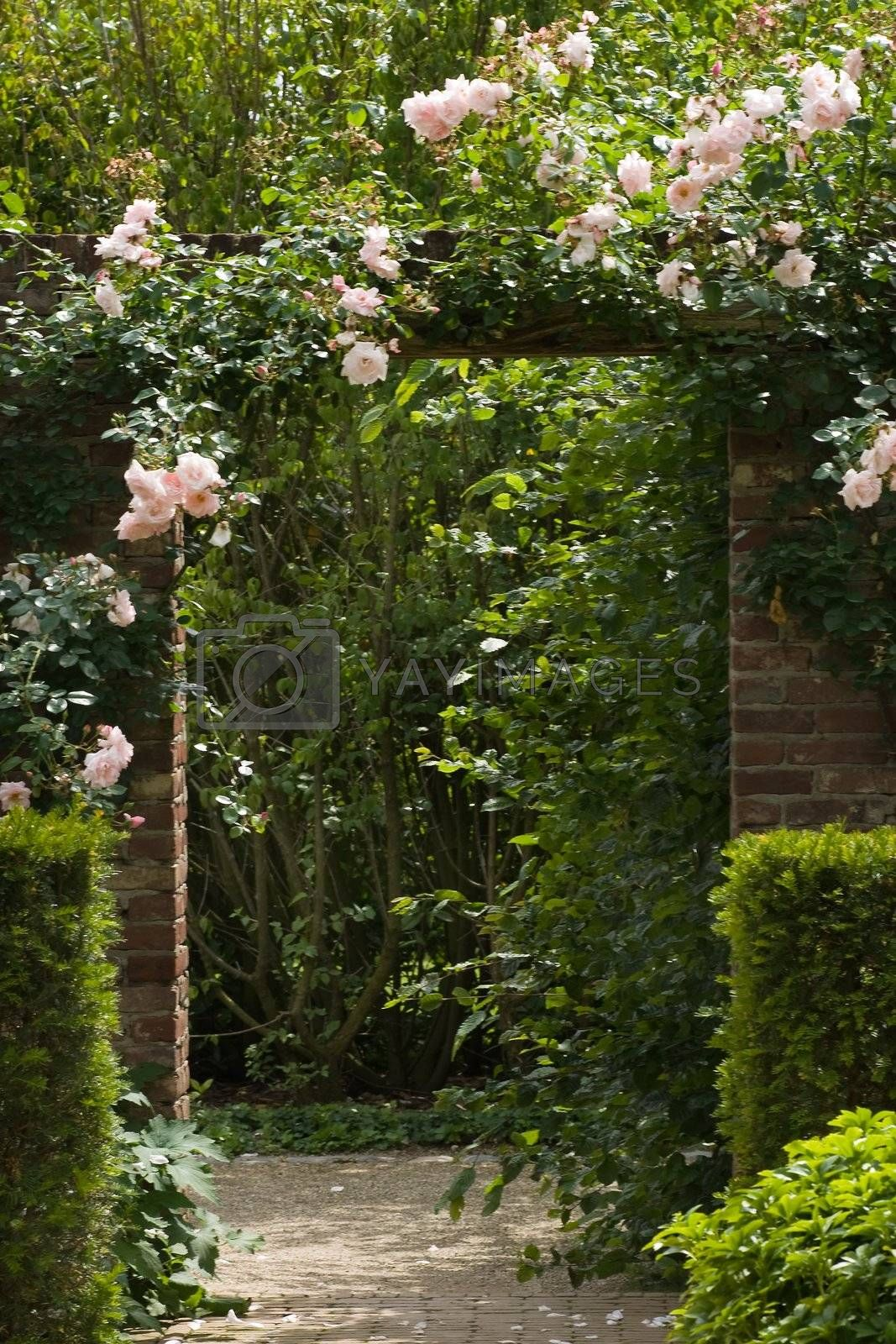 Royalty free image of Gate in stone wall in garden with roses by Colette