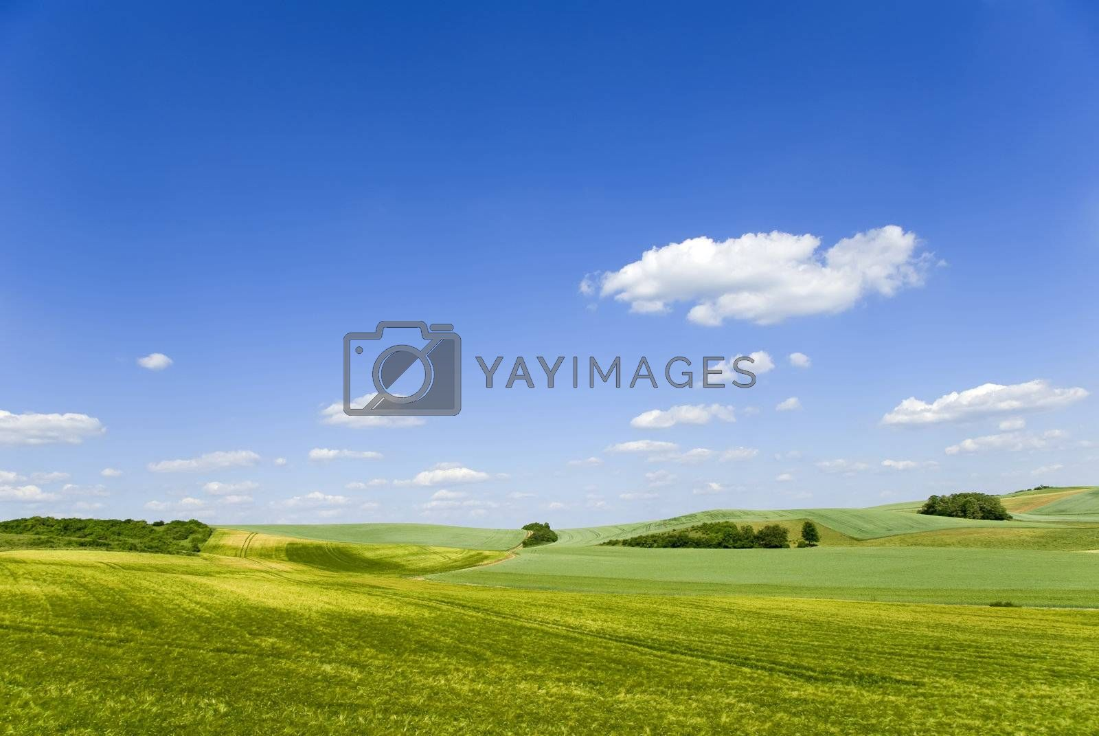 a countryside landscape