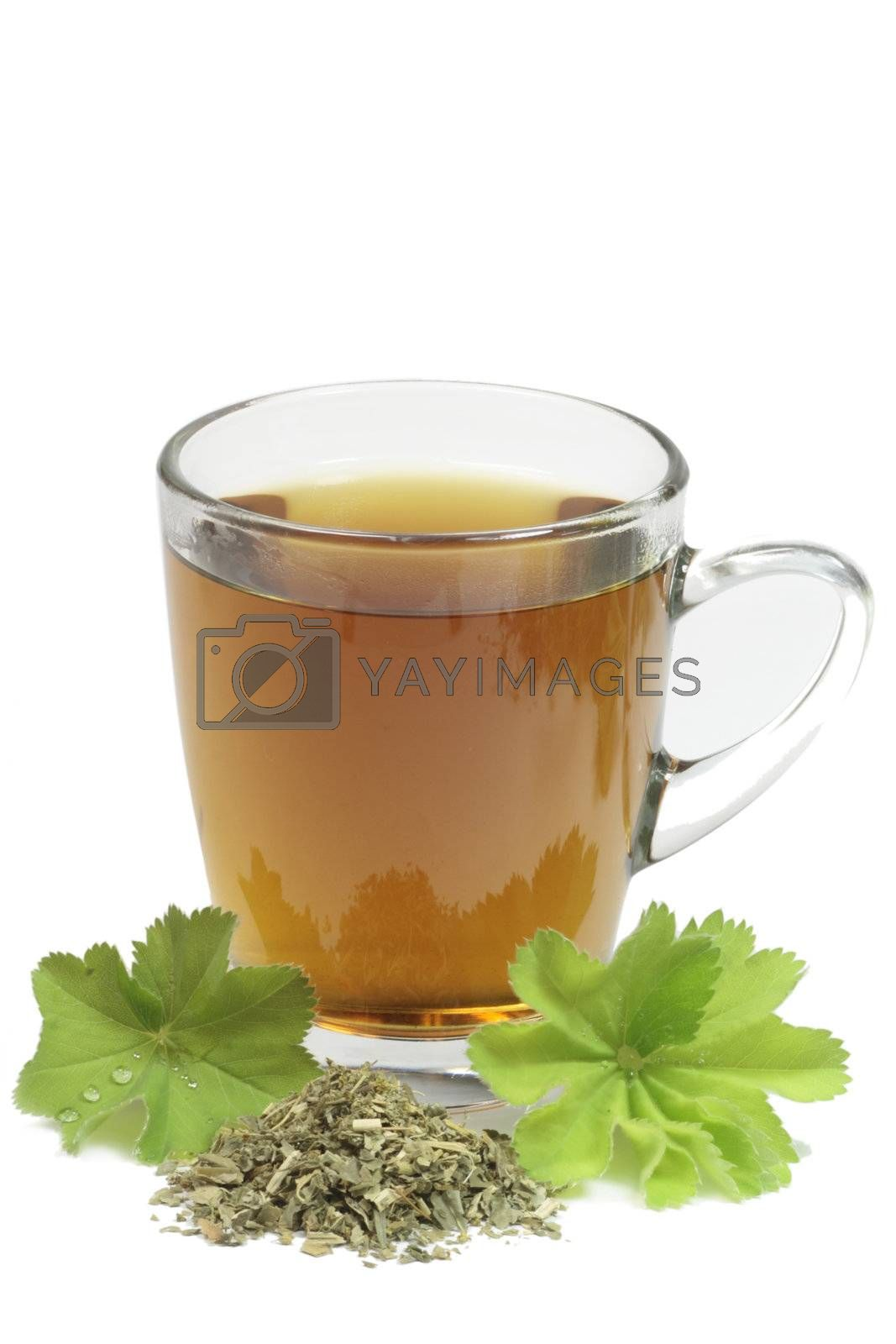 Herbal tea with ladys mantle - isolated on white background