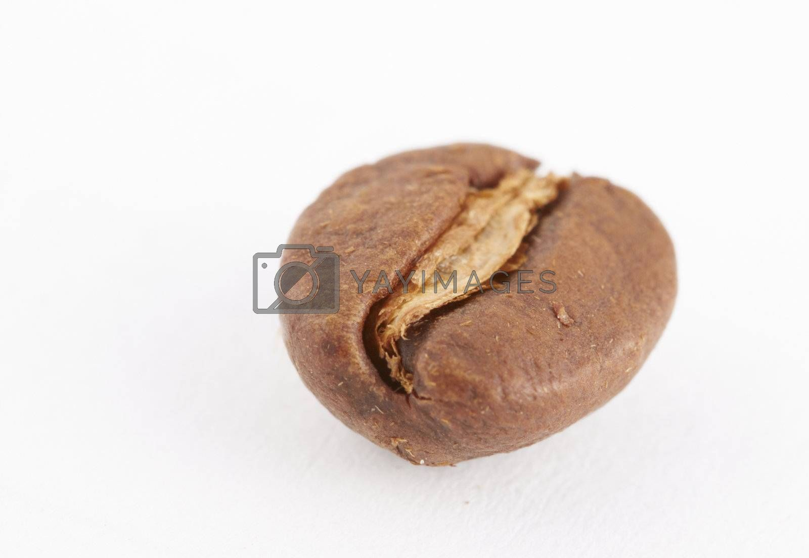 Macro shot of coffe bean on white with copy space