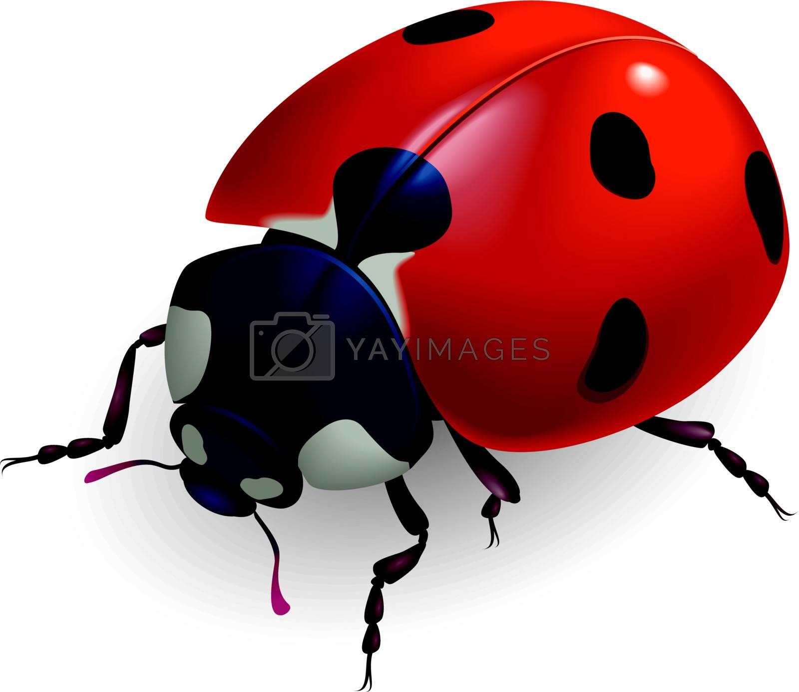 Ladybug. (Lat. Coccinellidae) Vector illustration.