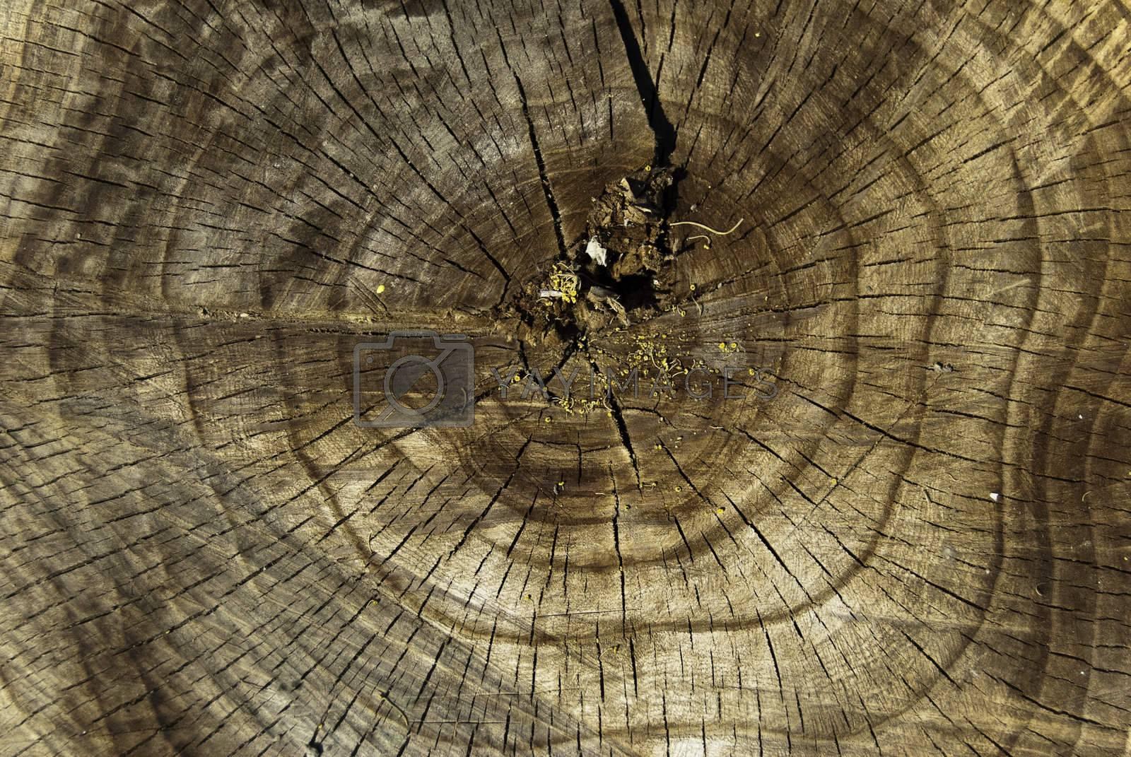 wood age circles