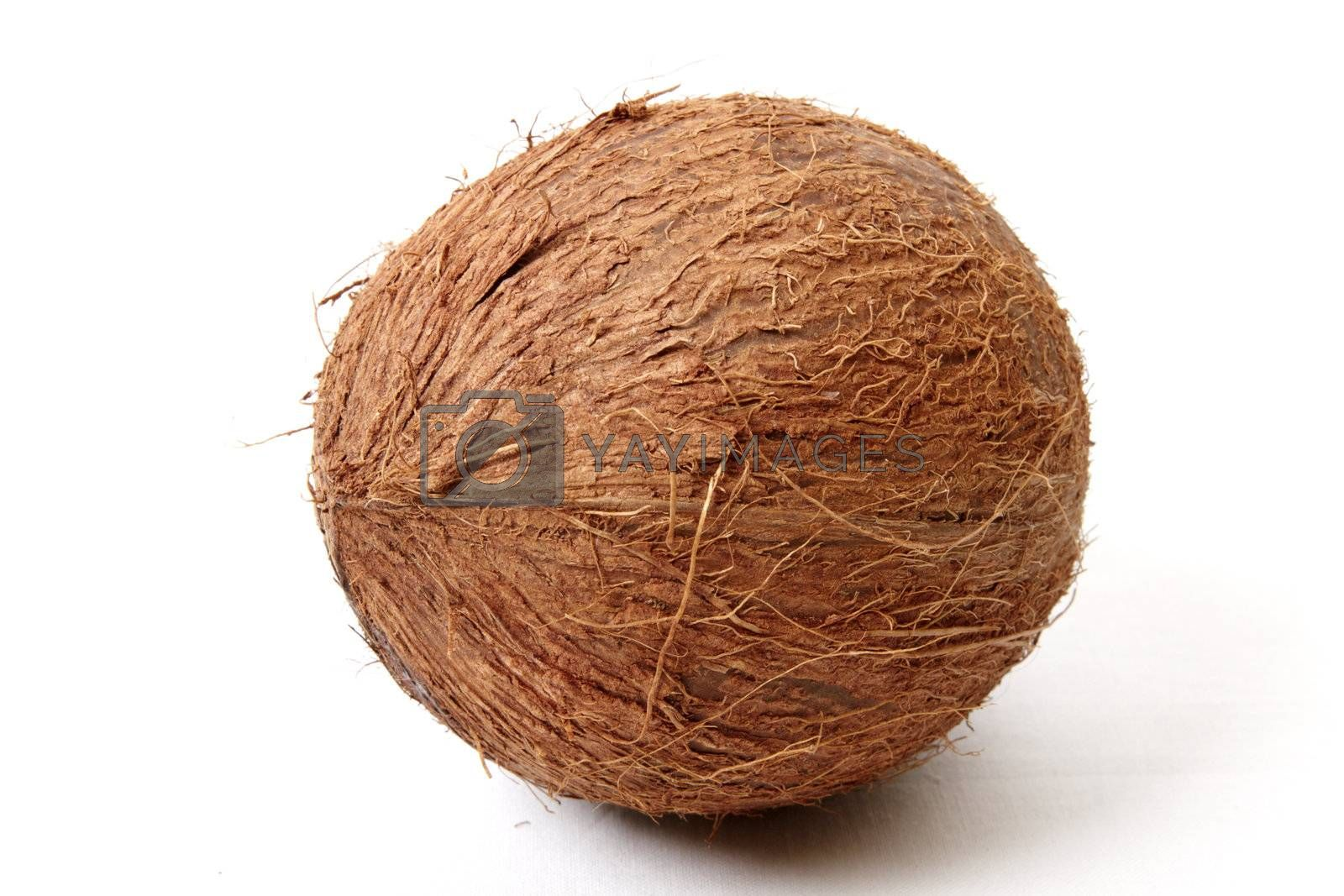 Coconut isolated on a white background. Close up image