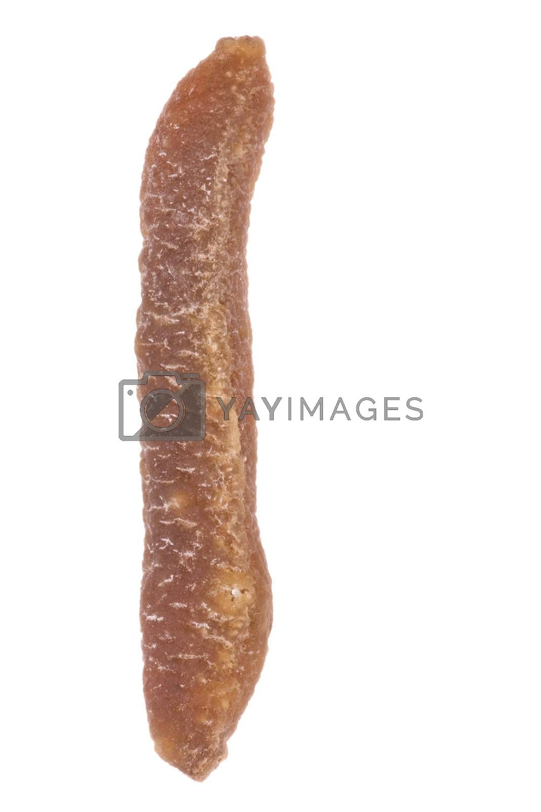 Isolated macro image of a dried sea cucumber.