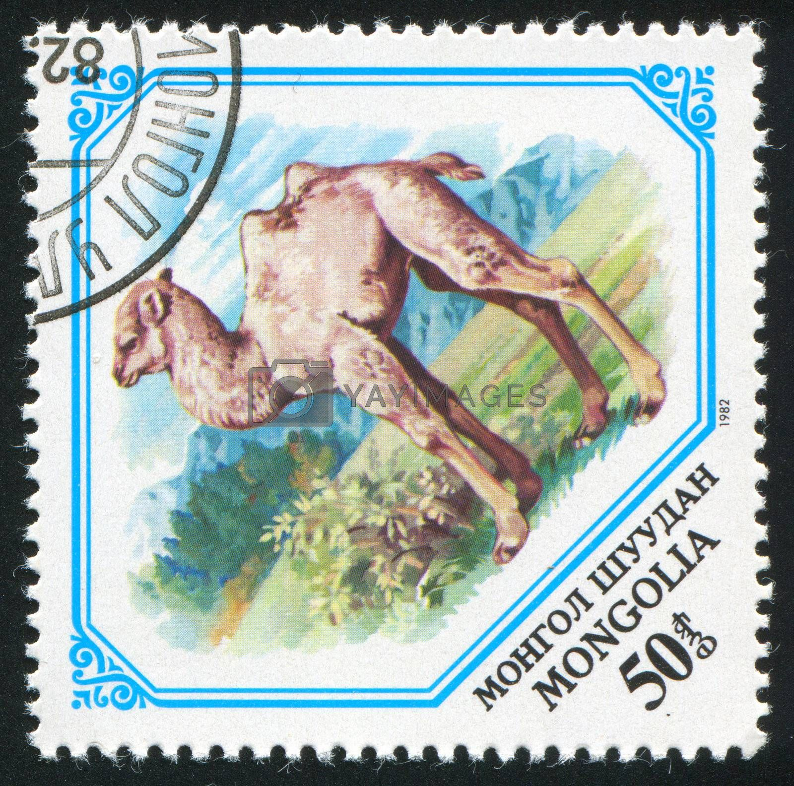 MONGOLIA - CIRCA 1982: stamp printed by Mongolia, shows Camel calf, circa 1982.