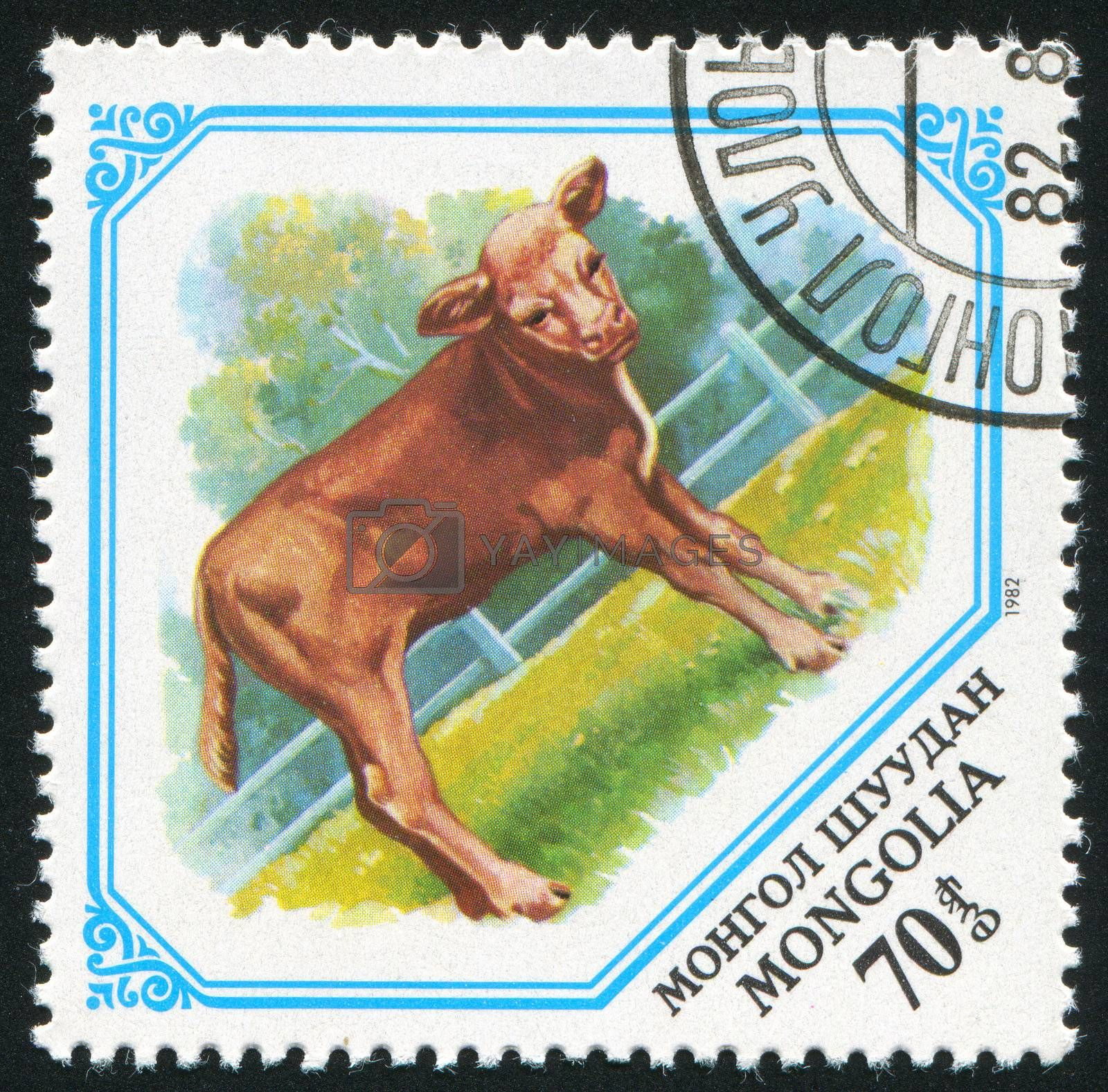 MONGOLIA - CIRCA 1982: stamp printed by Mongolia, shows Calf, circa 1982.