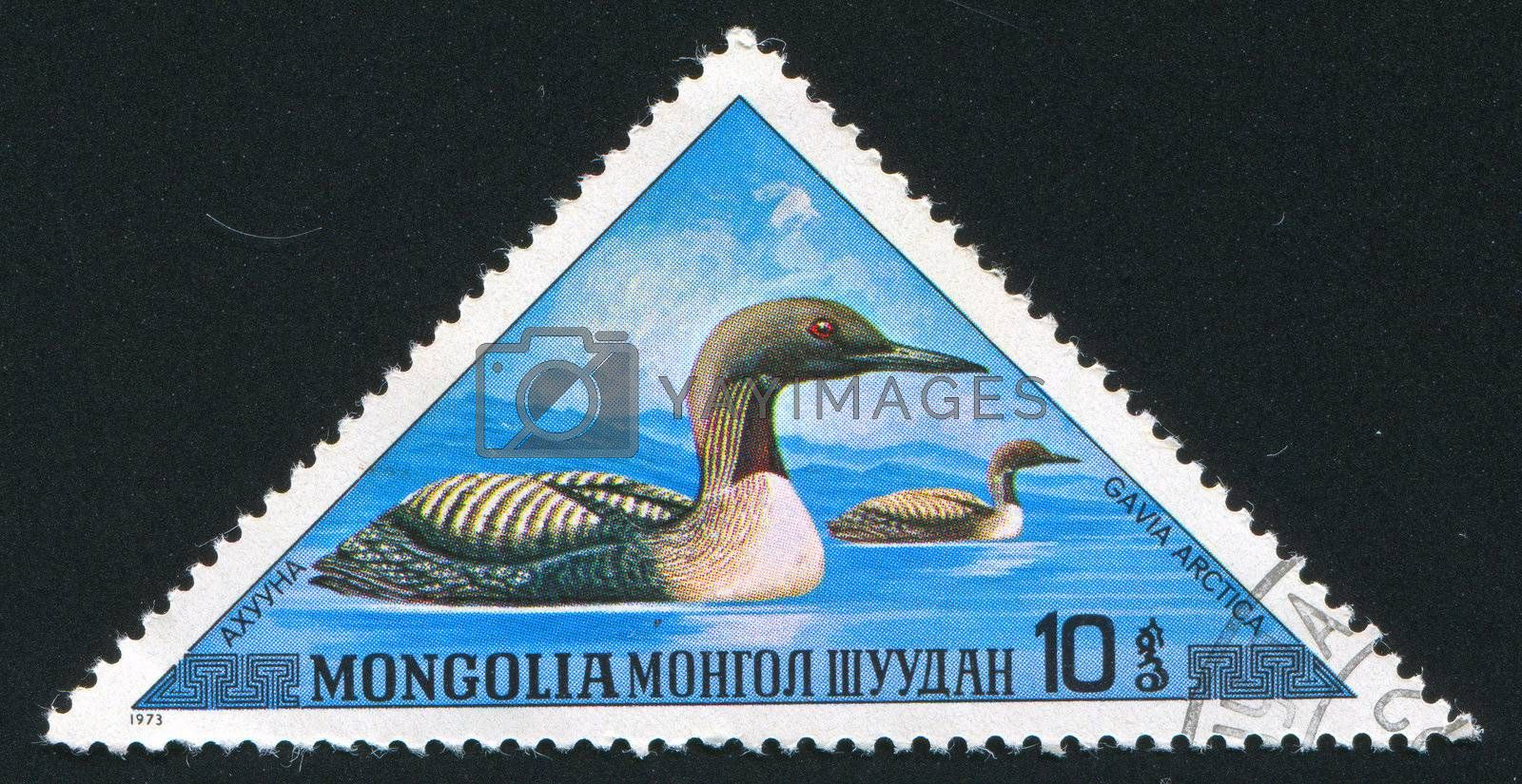 MONGOLIA - CIRCA 1973: stamp printed by Mongolia, shows duck, circa 1973.