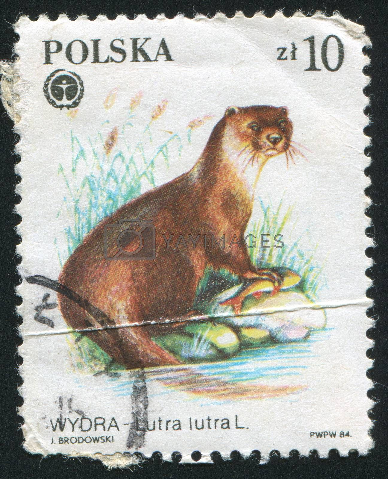 POLAND - CIRCA 1972: stamp printed by Poland, shows     otter, circa 1972.