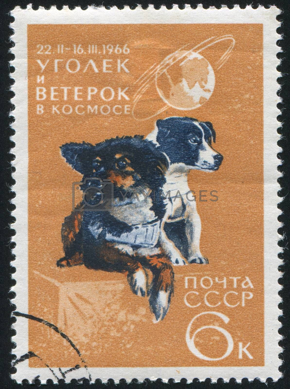 RUSSIA - CIRCA 1966: stamp printed by Russia, shows Dogs Ugolek and Veterok after Space Flight, circa 1966
