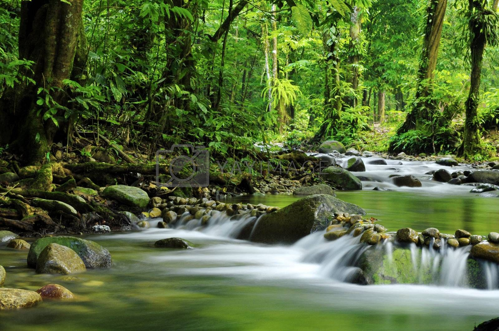 Royalty free image of Mountain stream by szefei