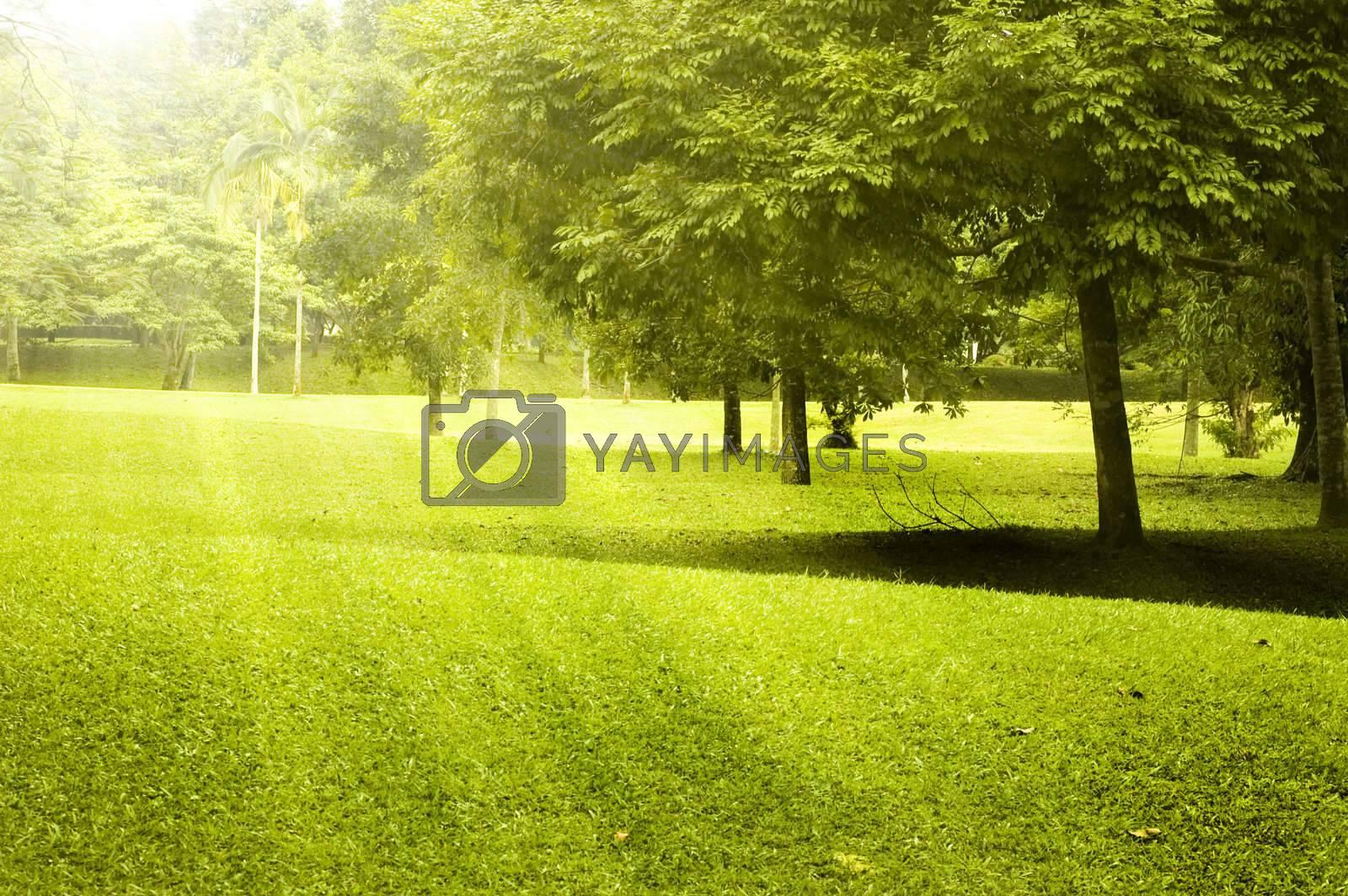 Royalty free image of Green field landscape by szefei