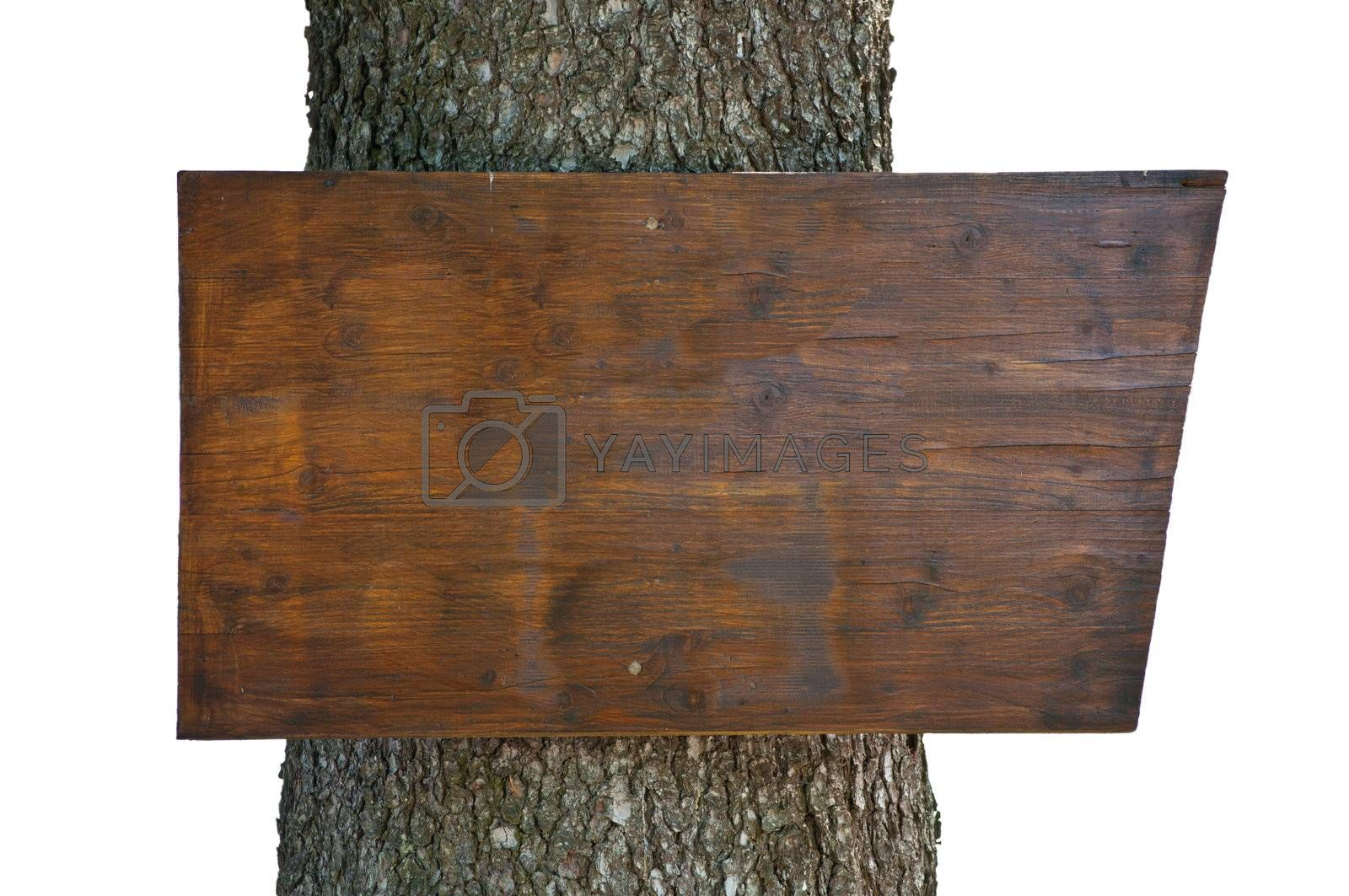 Empty wooden plank nailed to tree trunk on white background