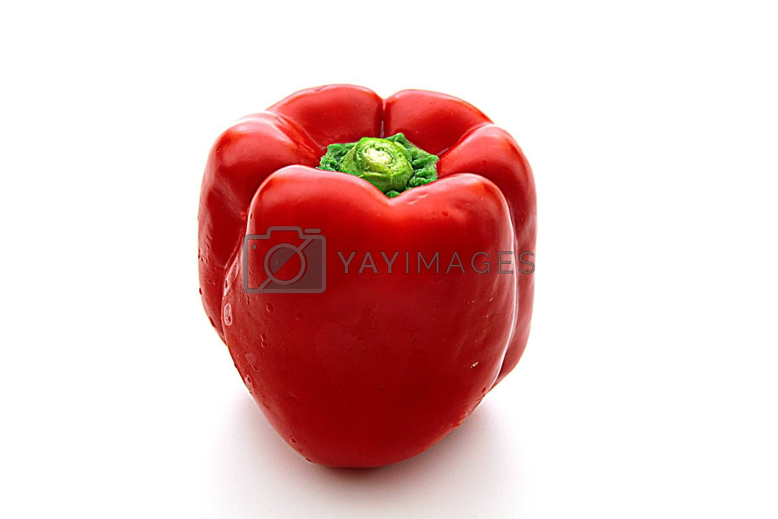 One red sweet pepper on a white background.