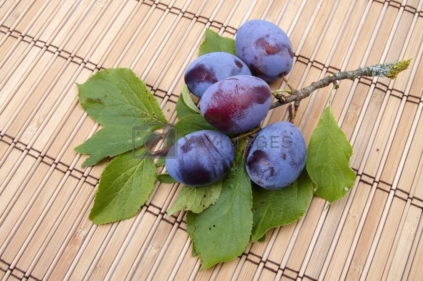 Plum branch on wooden napkins. Closeup image