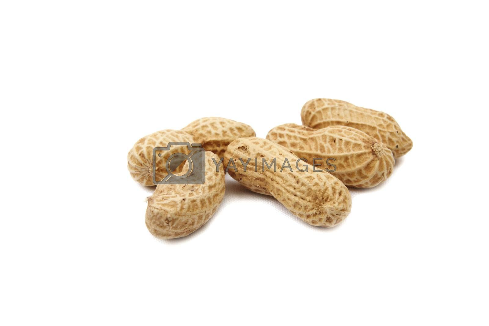Few peanuts isolated on white background. Close up image