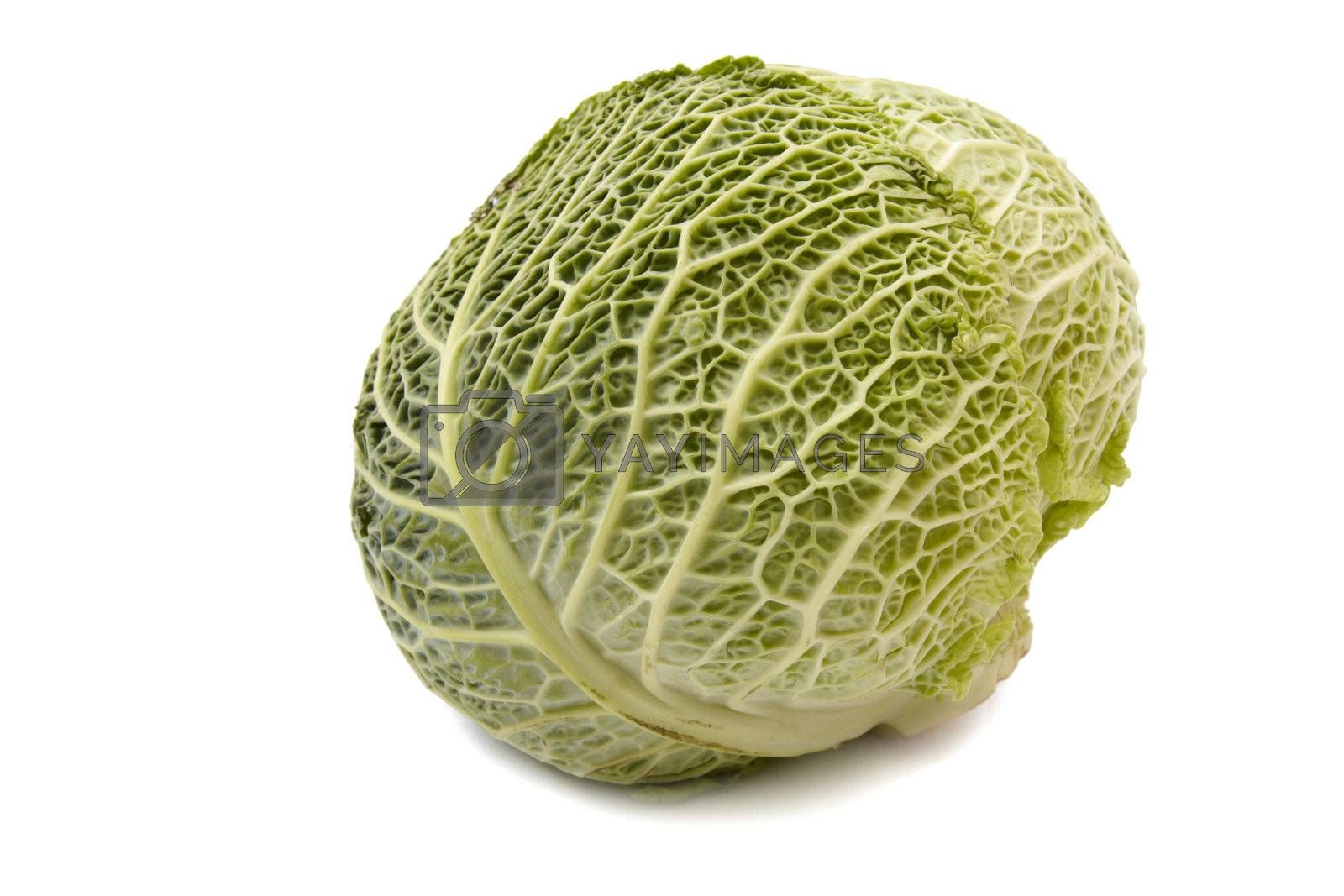 Head of savoy cabbage isolated on white background