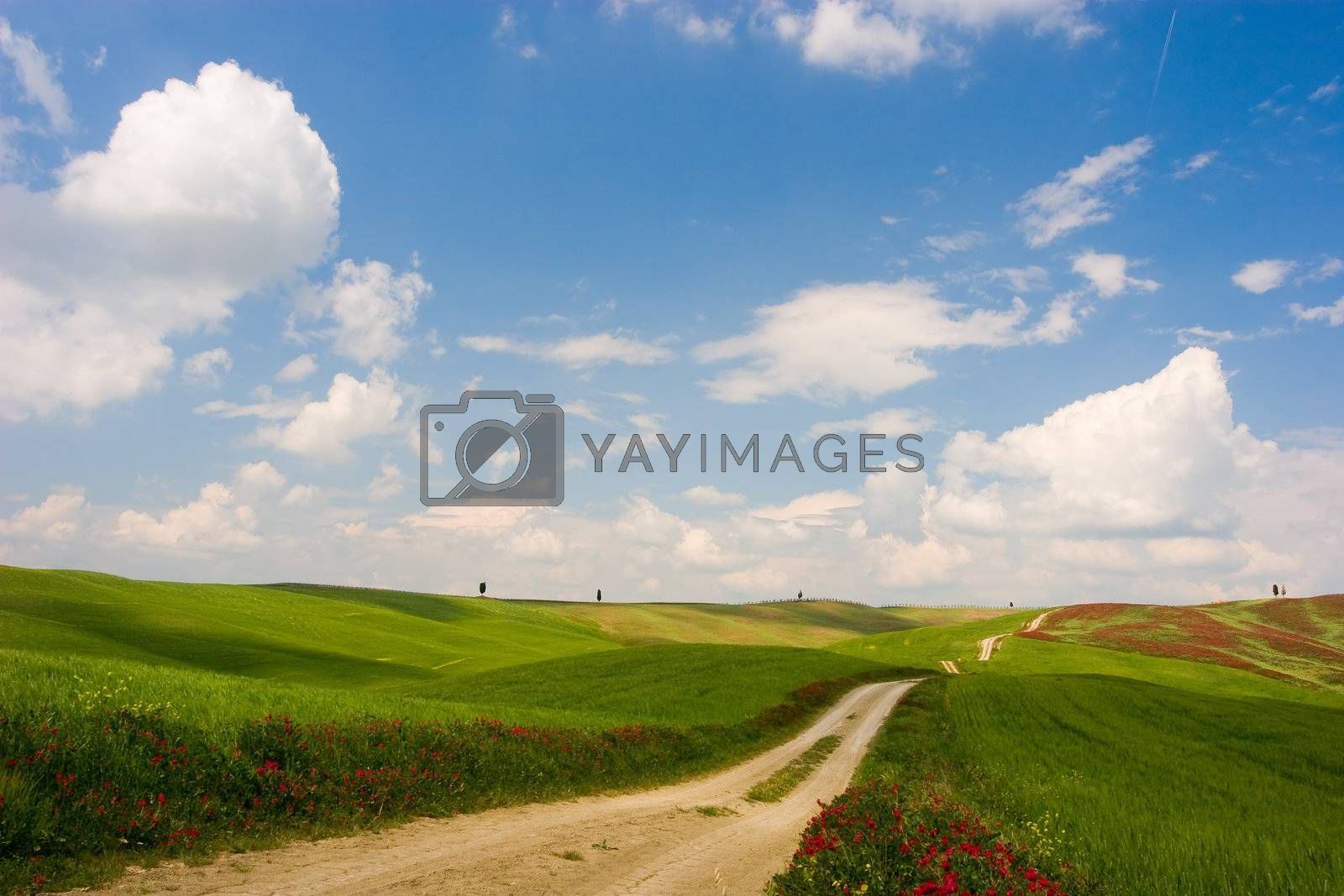 Royalty free image of Tuscan Landscape by ajn