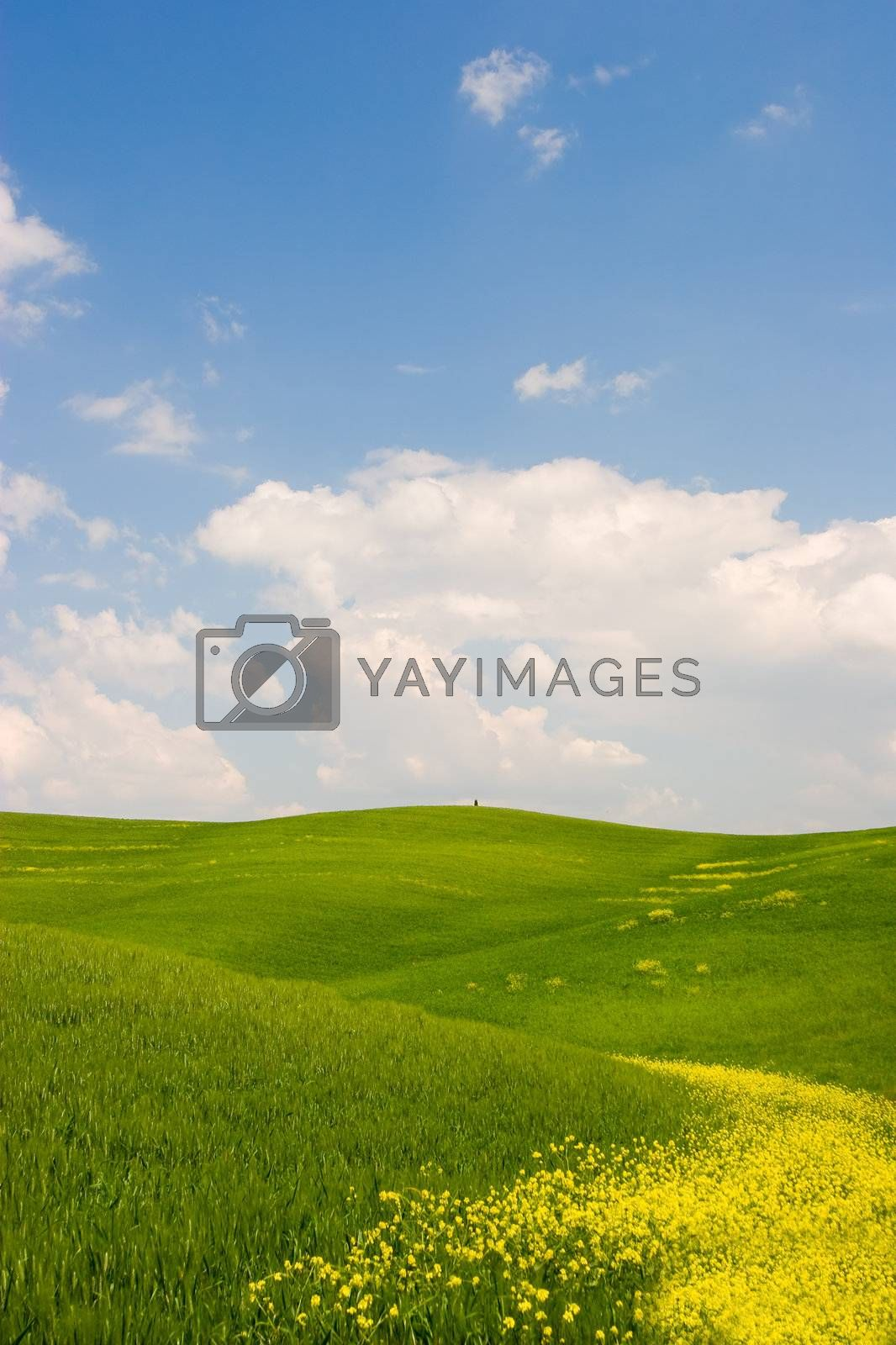 Beautiful spring flowered landscape in Tuscany, Italy.