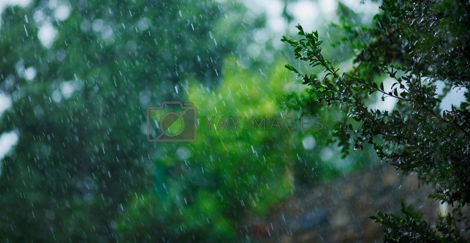 Heavy rain with a background of garden trees.