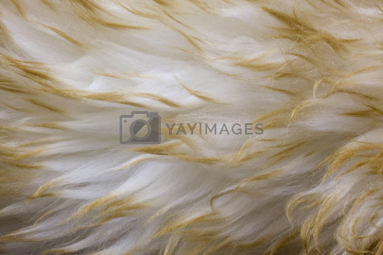 fur background - macto of Australian lambskin macro a wavy pattern