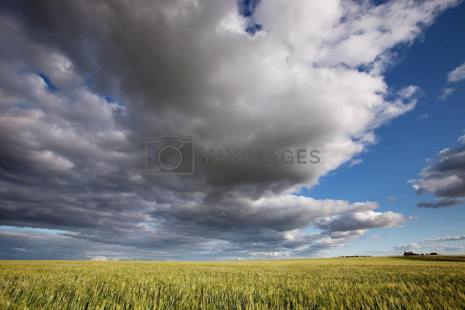 A prairie landscape with a dramatic cloudscape
